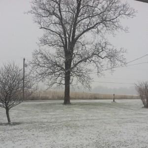 Thanksgiving-Snow